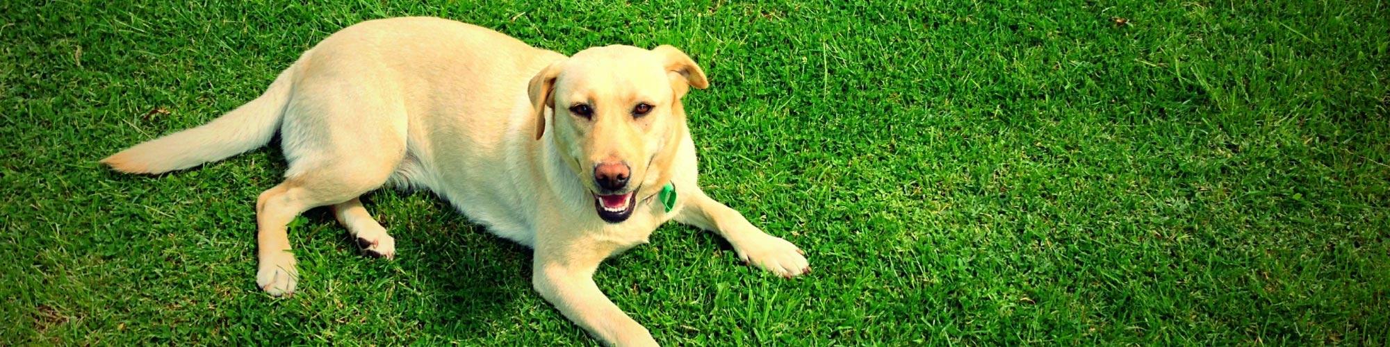 Mantieni il tuo cane in salute