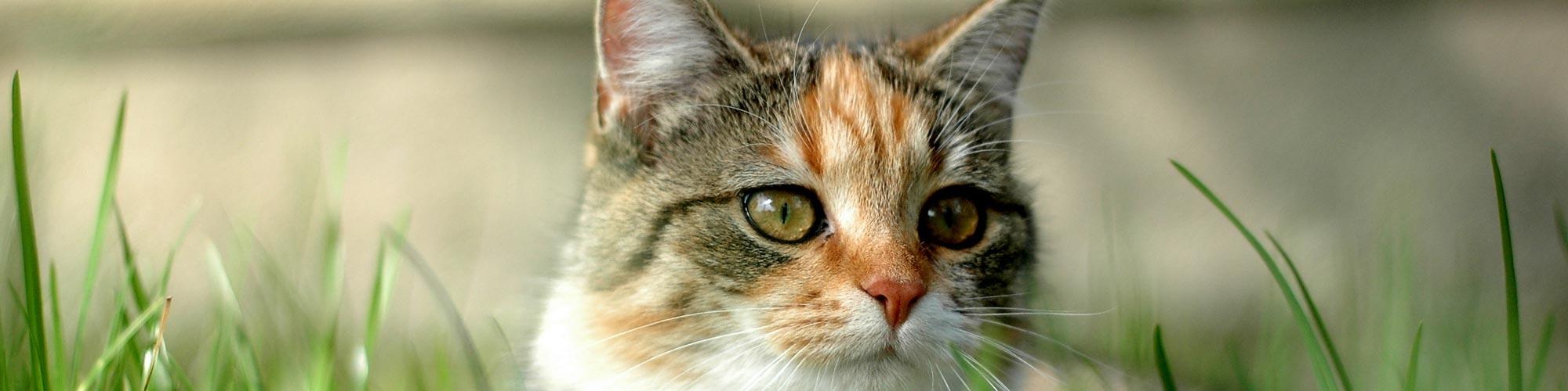 Prodotti per il benessere del tuo gatto